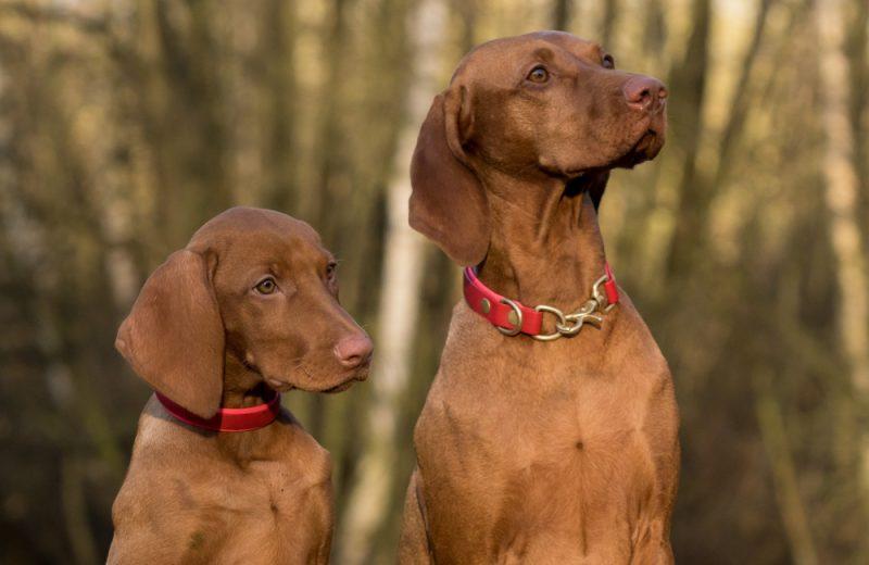 Lovački psi - Koje su vrste pasa najbolje kao saputnici ljudi u lovu