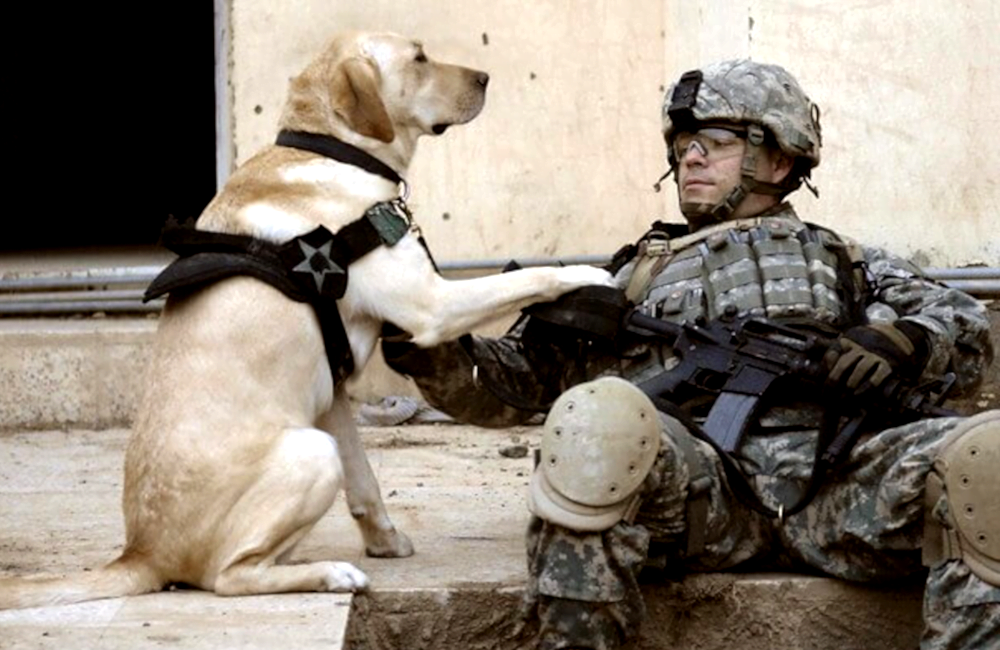 Obuka vojnih pasa